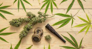 افتضاح آزمایش یک داروی تهیه شده از ماریجوانا در فرانسه