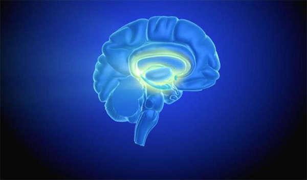 اثرات مصرف کوکائین بر مغز